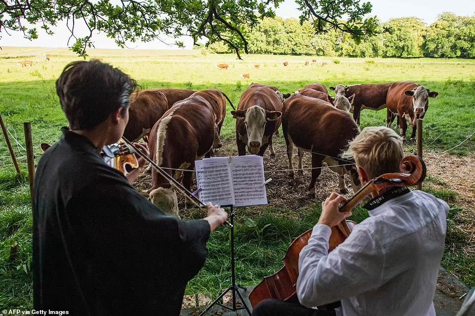 музыка для коров