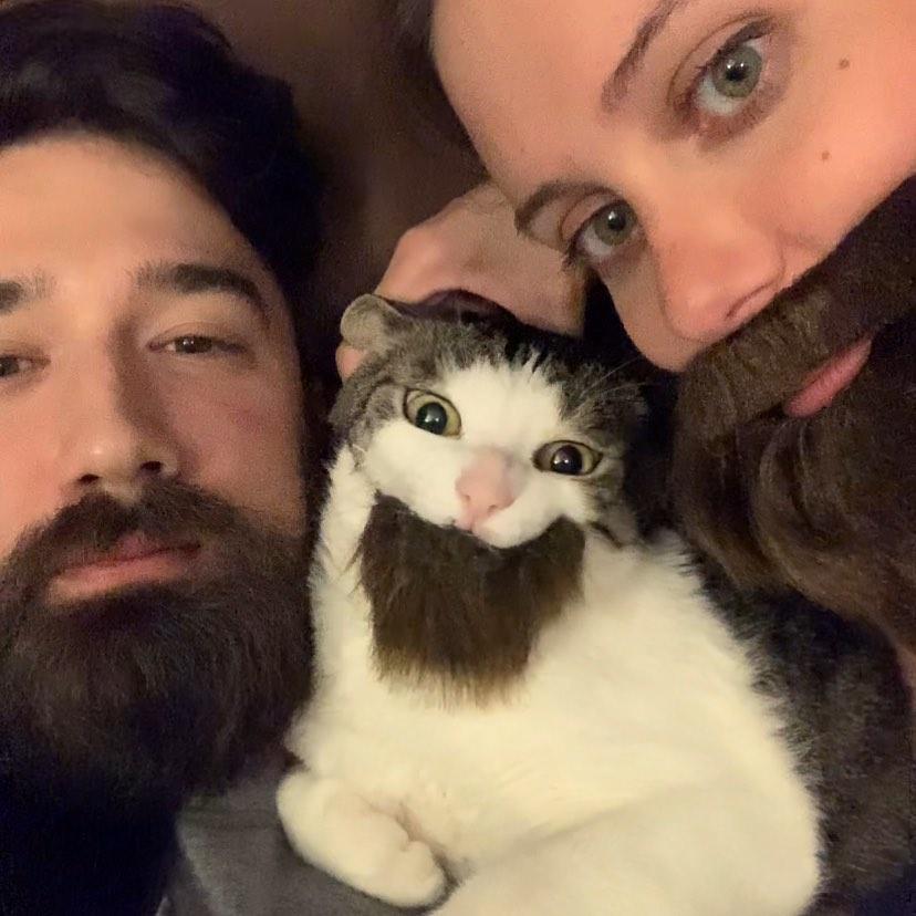 кошки и борода