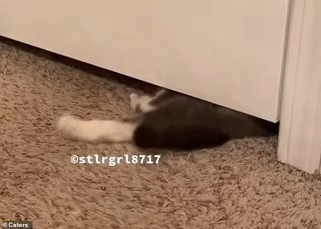 кошка под дверью