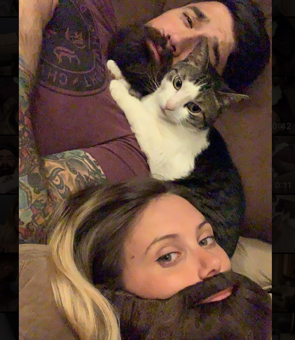 кот и бородачи
