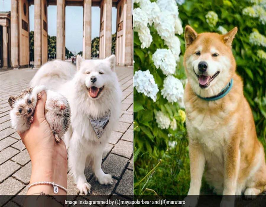 собаки инстаграма