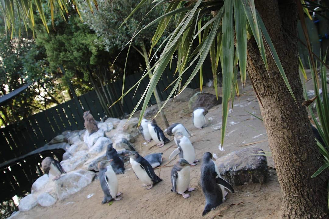 заповедник пингвинов