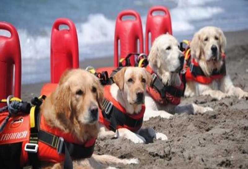 морские собаки-спасатели