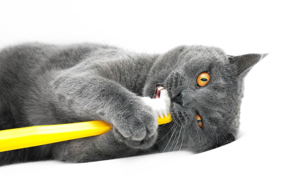 Почему  у кошек плохо пахнет изо рта