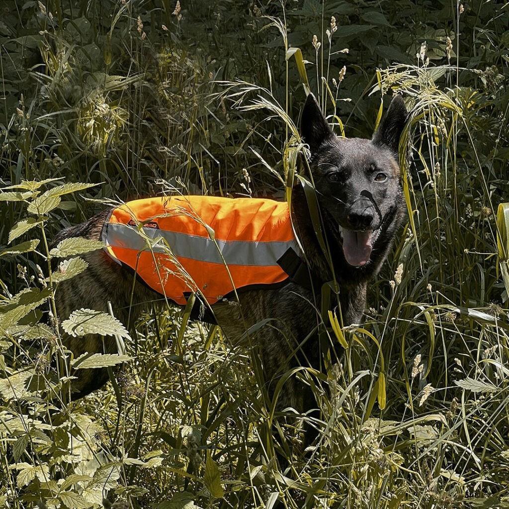 собака потерялась в лесу