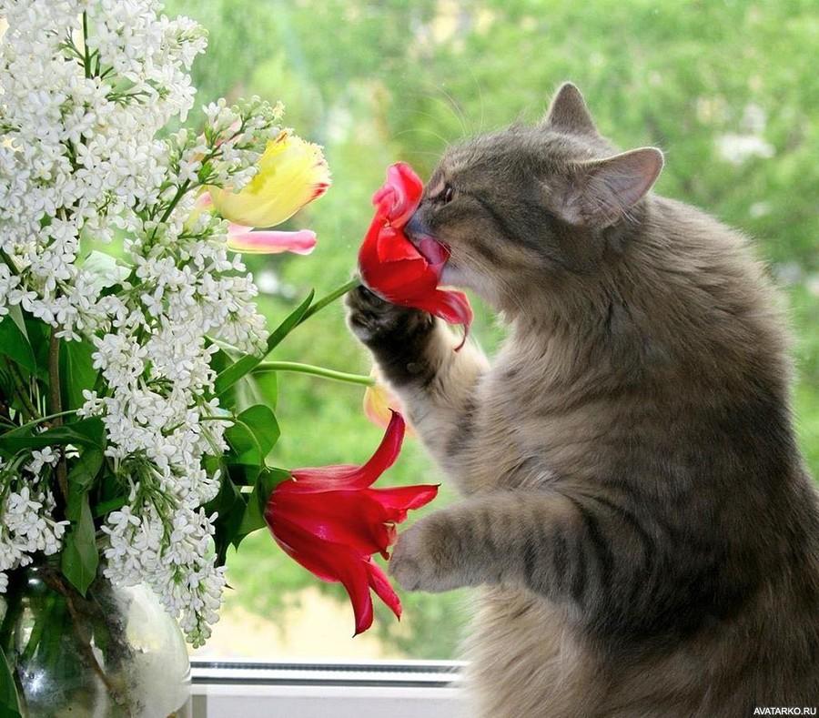 феромоны в жизни кошек