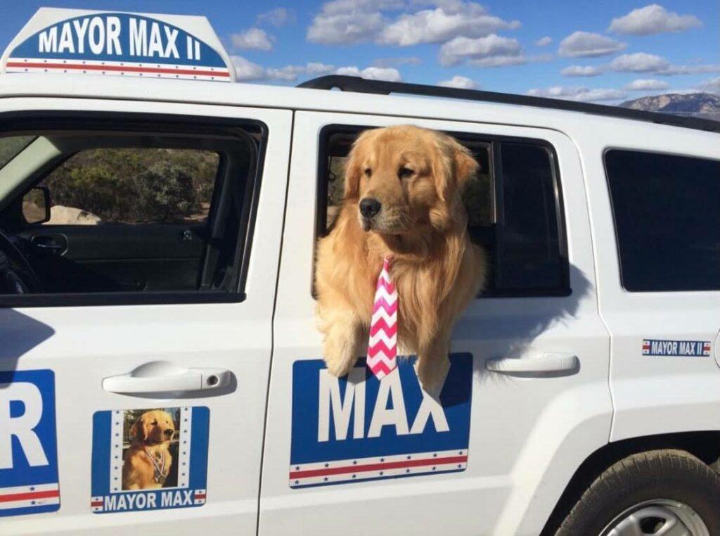 собака мэр
