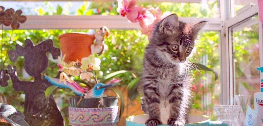 Осторожно! Некоторые комнатные растения смертельно опасны для кошек и собак!