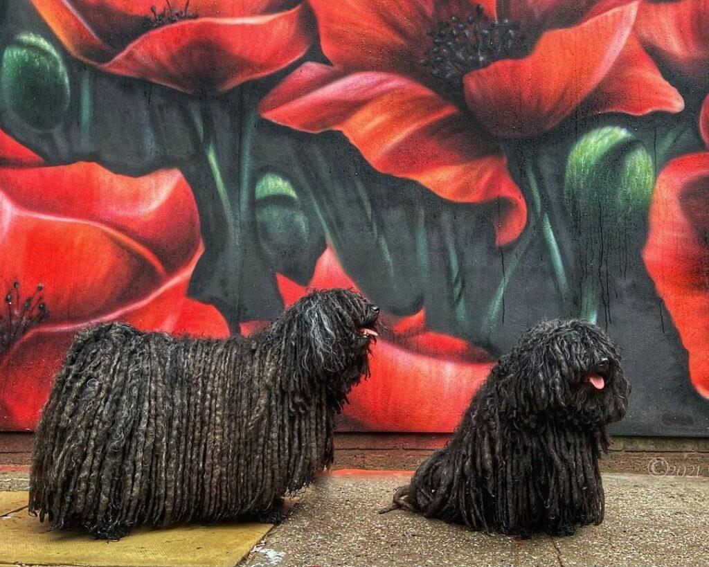 две черные собаки