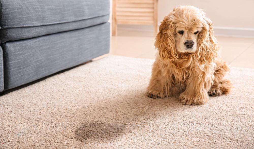 собака метит дома