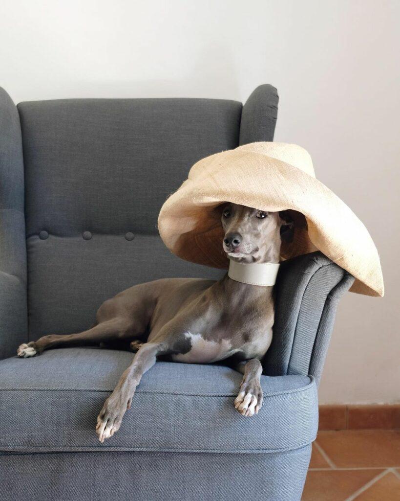 Самая стильная собака Instagram и представитель фирмы Fujifilm UK