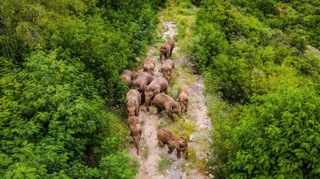 слоны в китае