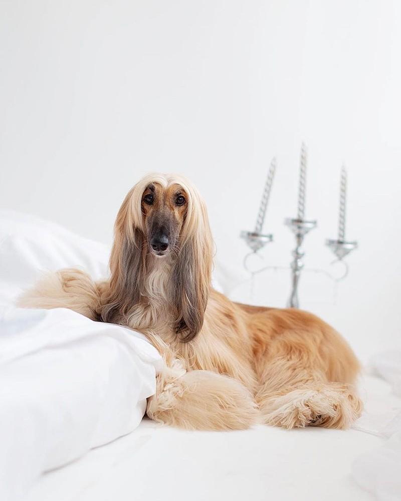 02 st 1 1 - 15 самых дорогих и редких собак в мире