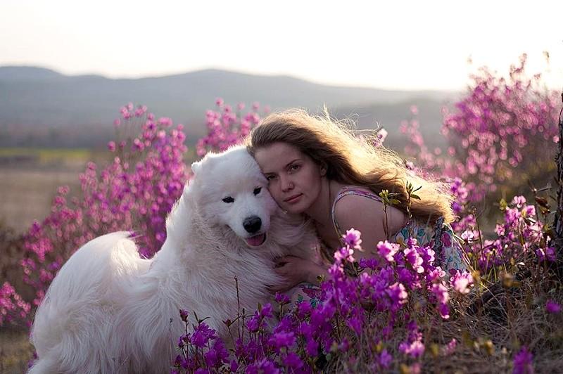 Самоедская собака с любимой хозяйкой