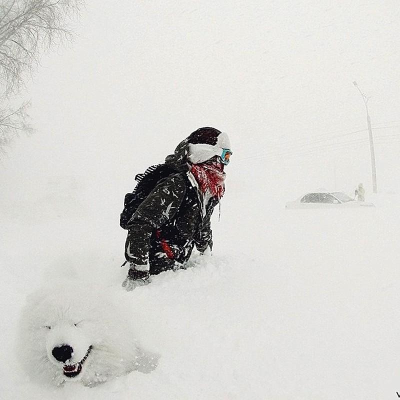 Самоедская собака и буря