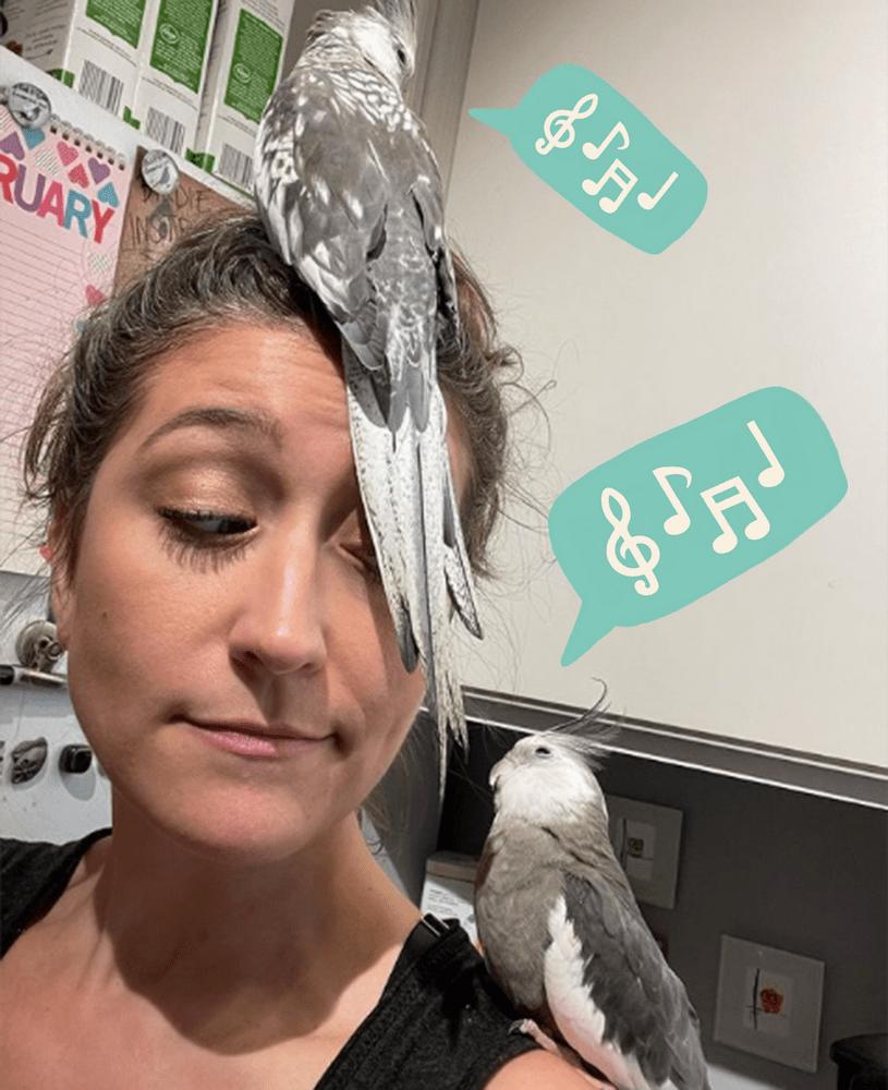 хозяйка и попугаи