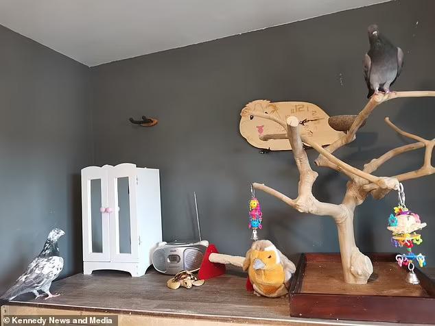 комната для голубей