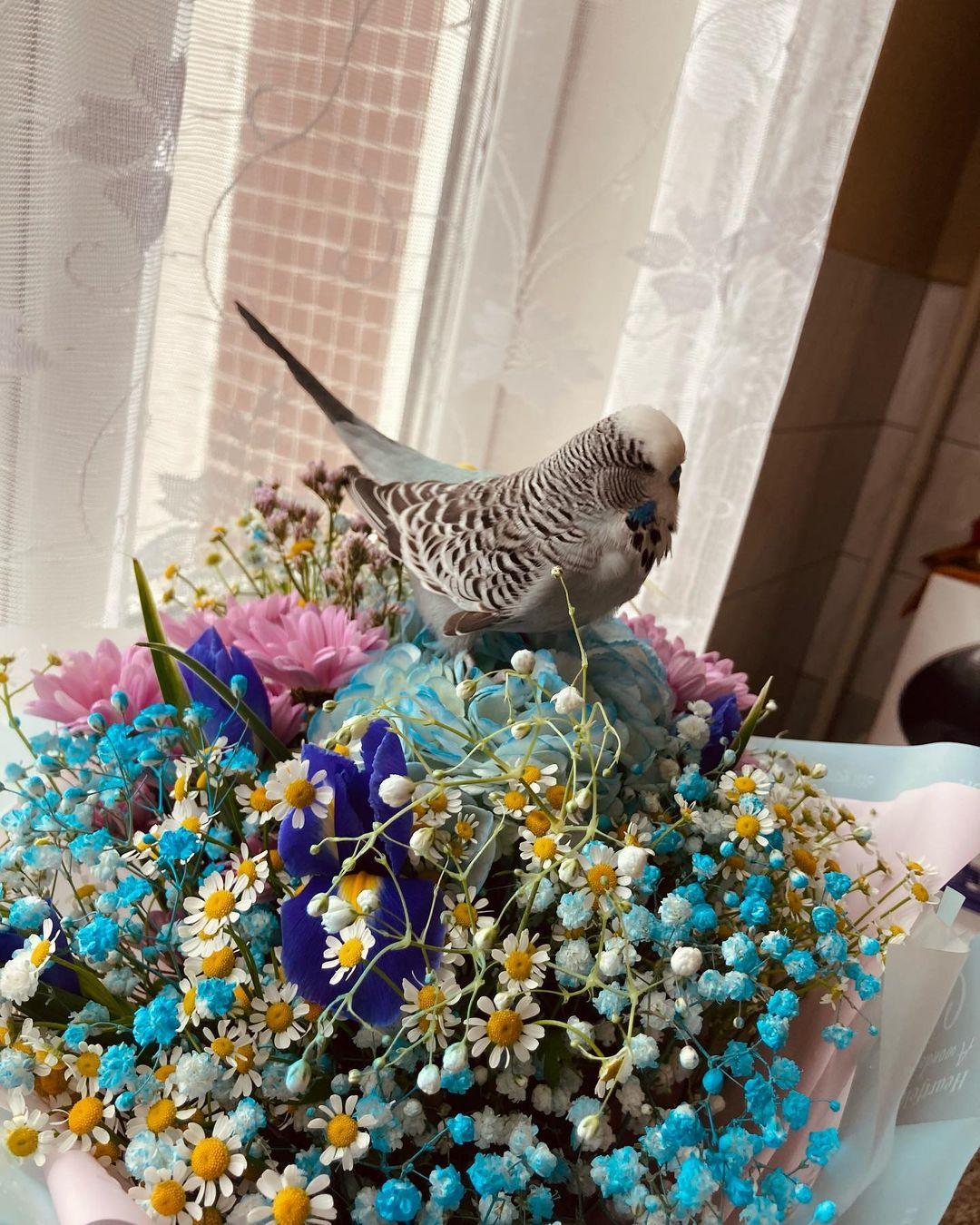 попугайчик и цветы