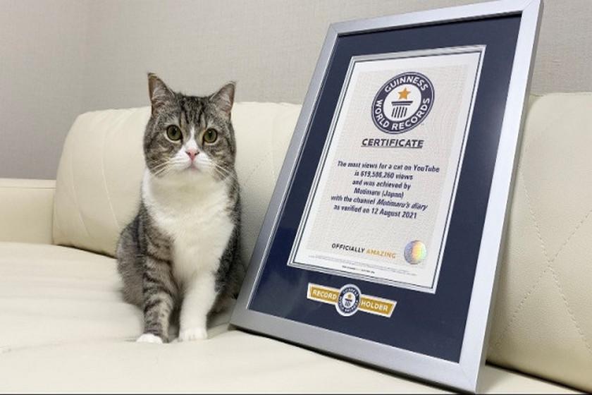 кот и сертификат