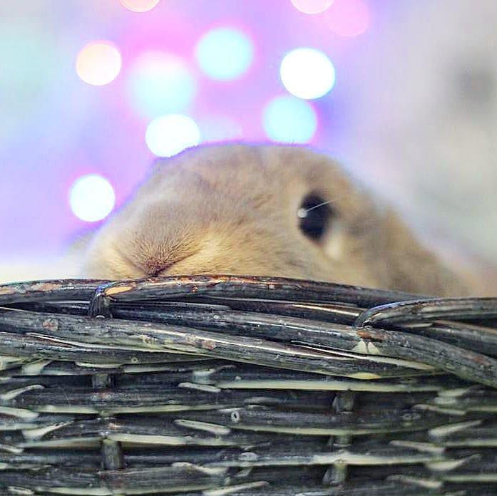 кролик в корзинке