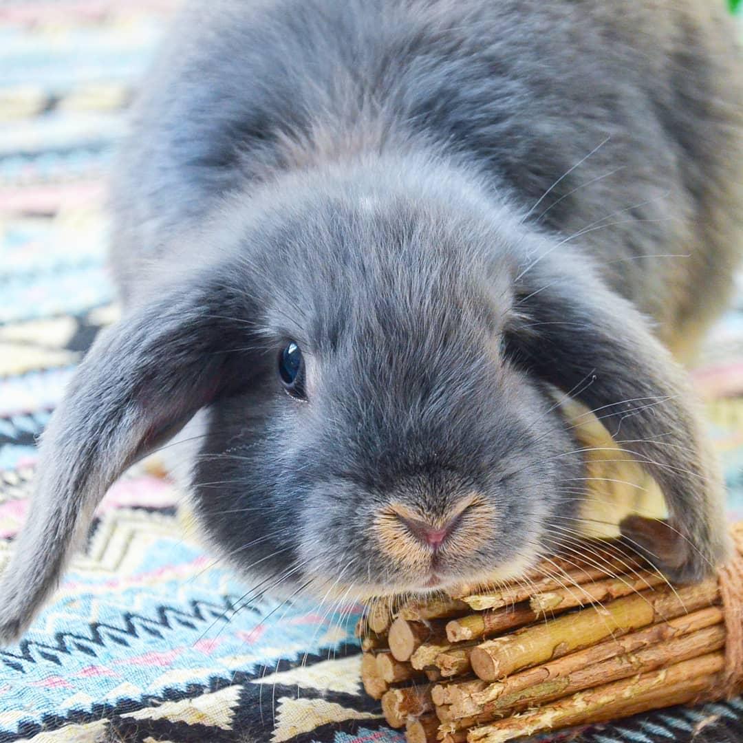 кролик с веточками