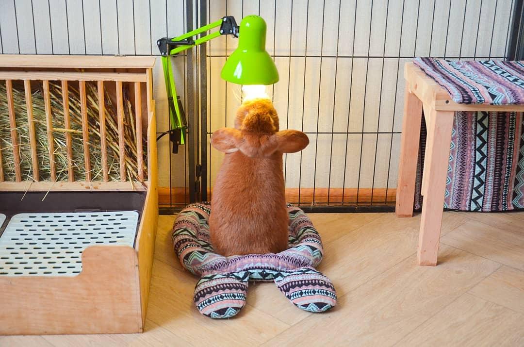 кролик греется под уф лампой