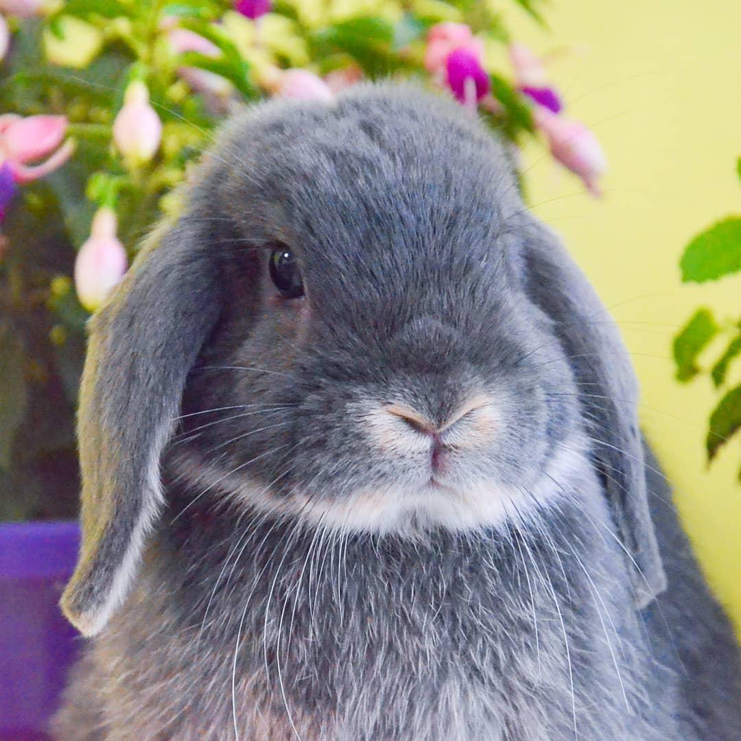 кролик незабудка