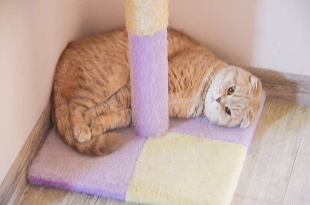 кошка в углу
