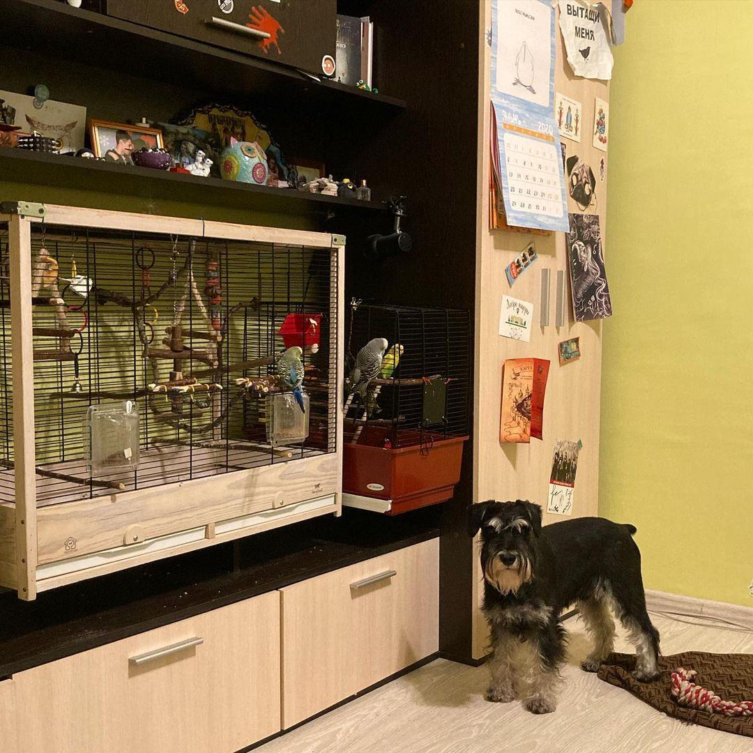собака у клетки с попугаями