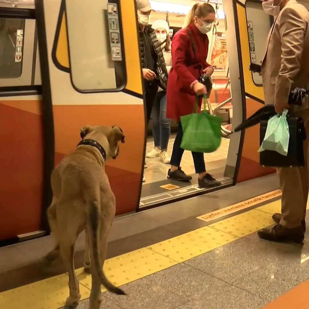 пес в метро