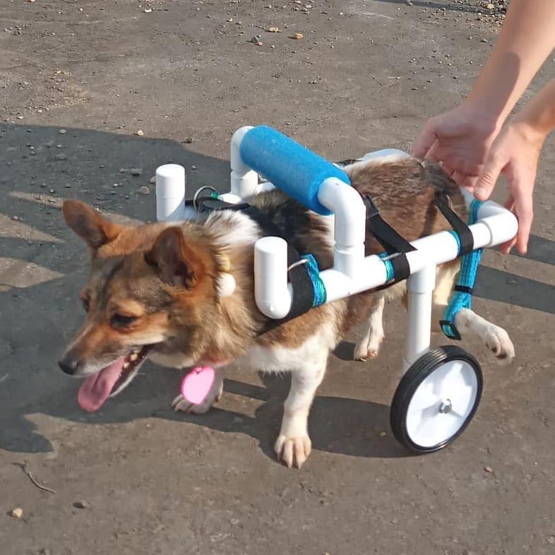 собака в инвалидной тележке