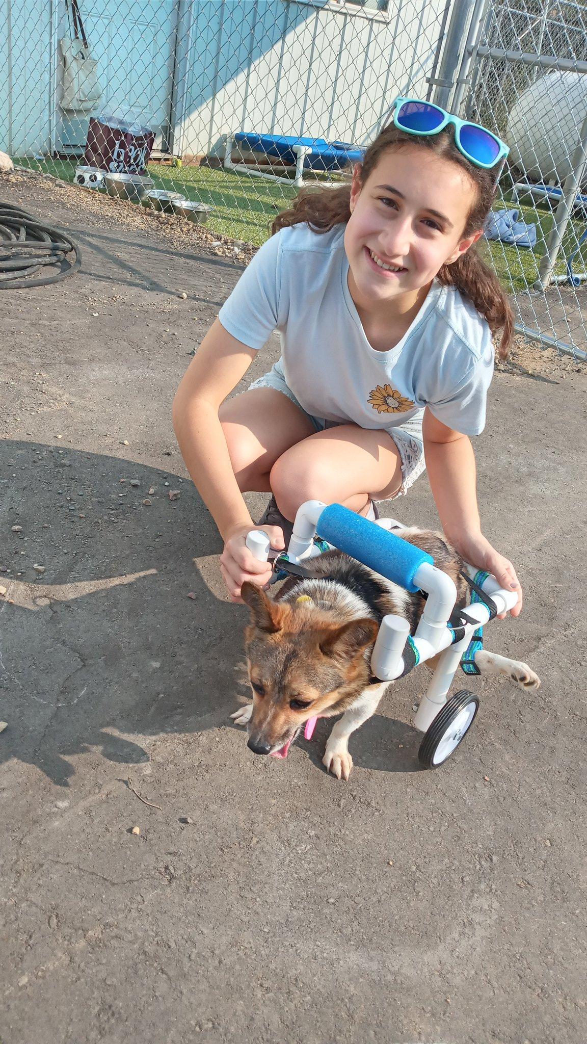 девушка и собака в инвалидной тележке