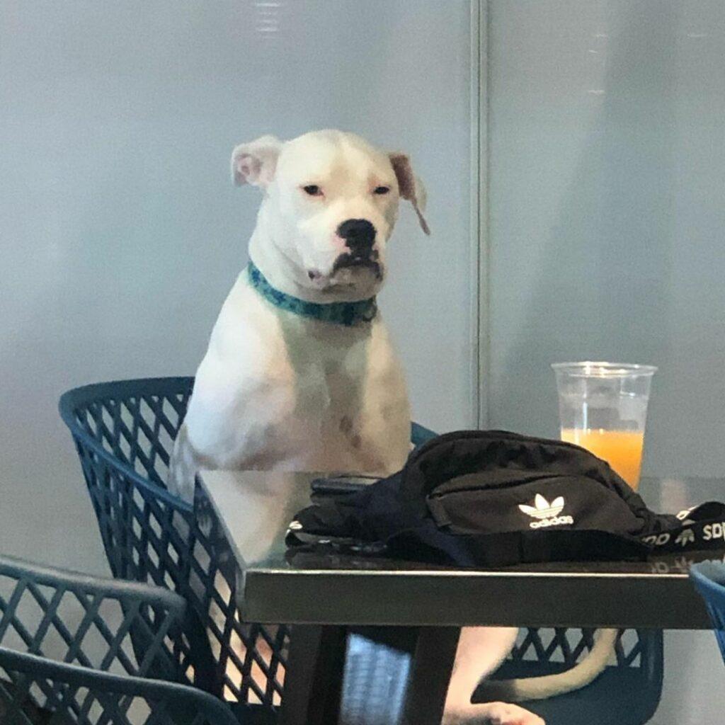 собака за столиком кафе