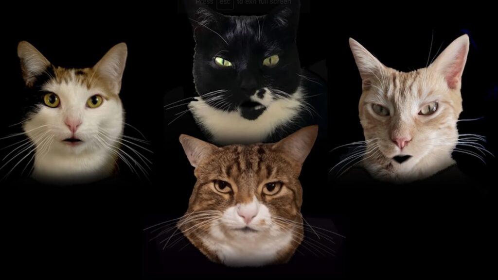 кошачий квартет