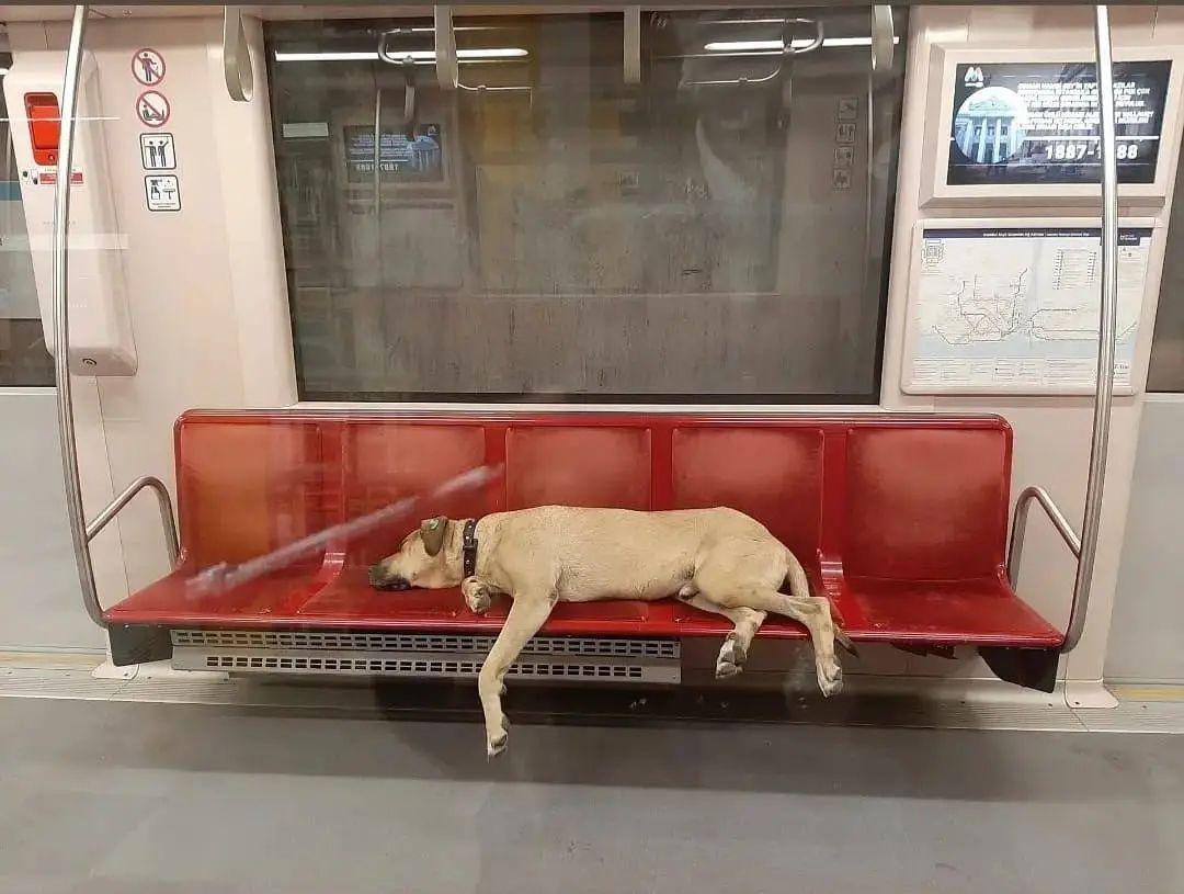 пес спит в метро