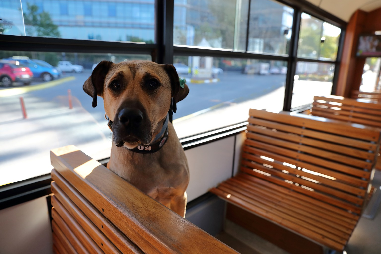пес в трамвае
